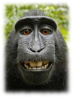 Autoportrait macaque